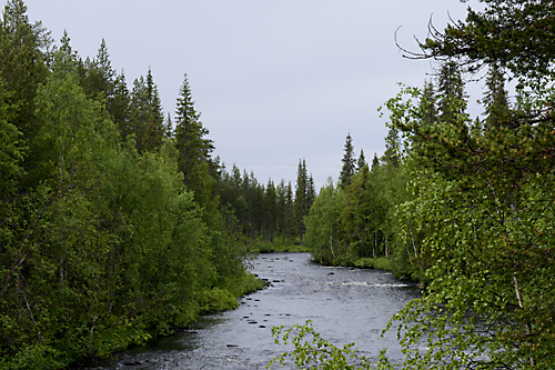 130615_niliterrängen_S126