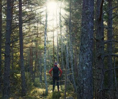 151015_skog0021